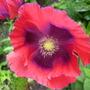 Aug_23rd_2013_garden_001