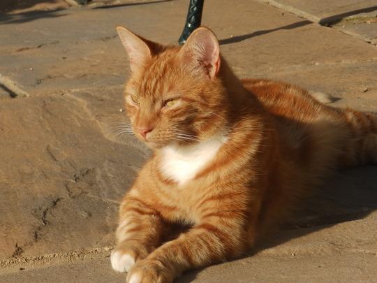 Our ginger cat enjoying the sunshine.