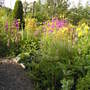 Bog garden in bloom