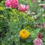 My mix...zinnias, poppies, dill, cilantro