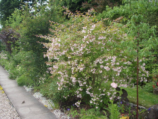 Long border in June