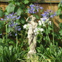 Agapanthus in pots on patio.