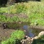 pond half filled by autumn rain.