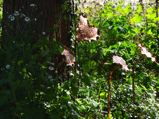 Copper coloured leaves