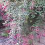 Autumn_065