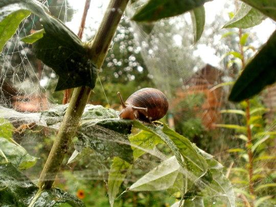 snail smiling