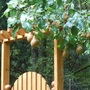 Pears1a