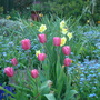 Tulips on centre rockery in April