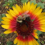 Bee---utiful!