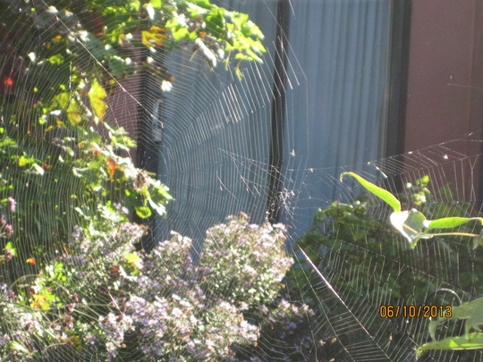 Orb spiders webs