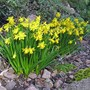 Muncaster Castle spring flowers