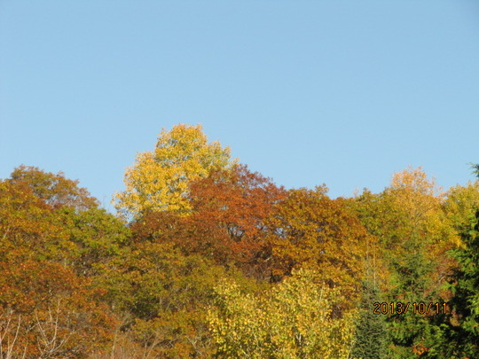 on the high hills ...aspen/poplar and oak