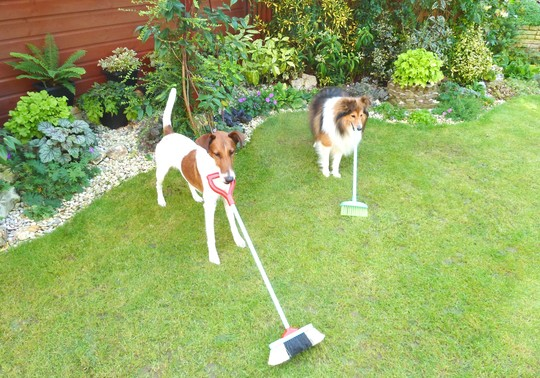Preparing the lawns for winter ...
