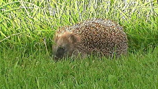 Our garden visitor.