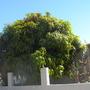 Coronado_plant_pics_10_16_13_6_