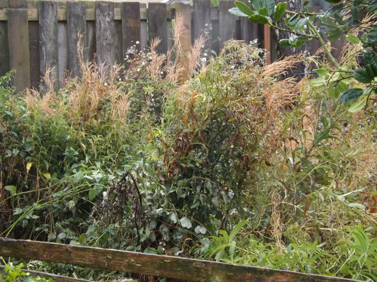 If you don't like weeds - look away now!