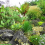 Rockery (Ensete Maurelii)