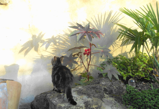 Go on, Lucy! Jump! (Ricinus communis (Castor oil plant))
