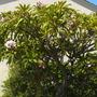 Coronado_plant_pics_10_16_13_1_