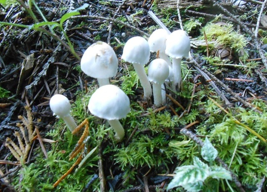 Fungi Vancouver Island, Canada
