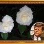 John F. Kennedy Rose