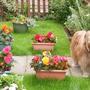 Bea in the front garden