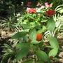 Blooming Things