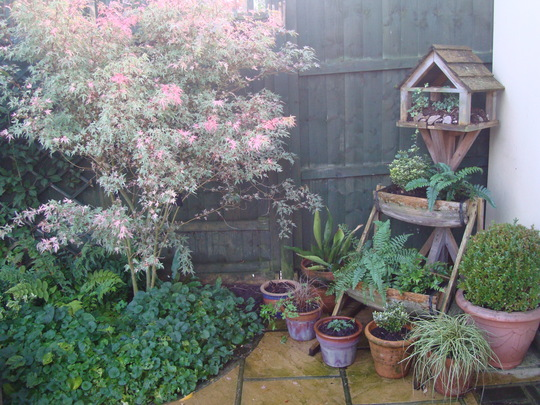 New use for old Bird Table
