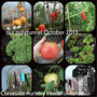 Collage_polytunnel