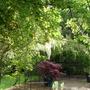 Garden_068