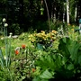 Midsummer Blooms