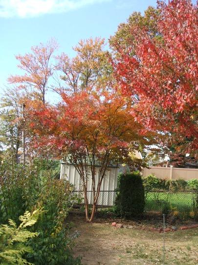 Autumn in my Garden