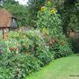 Vegtetable Garden