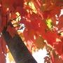 Inside the Maple Tree