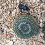 image Cacti at Wisley