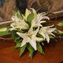 White Lilies (Lilium)