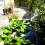 Waterlillies in the backyard patio