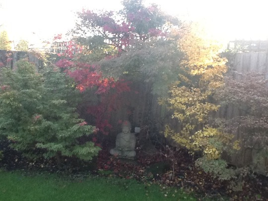 My daughters acer corner in the sunshine today.