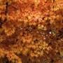 My Favorite Autumn Tree