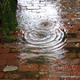 End-of-Spring in N.E. Downunder - it's wonderful to finally smell rain, hear it falling on the roof and see puddles lying around