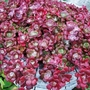 5_sedum_spathulifolium_purpureum