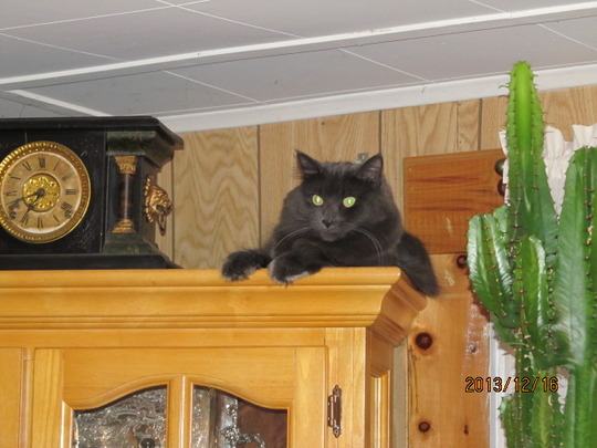 Rufus' new favourite spot!