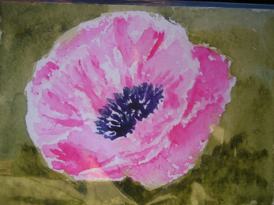 December Poppy ACEO