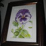 Pansy watercolour