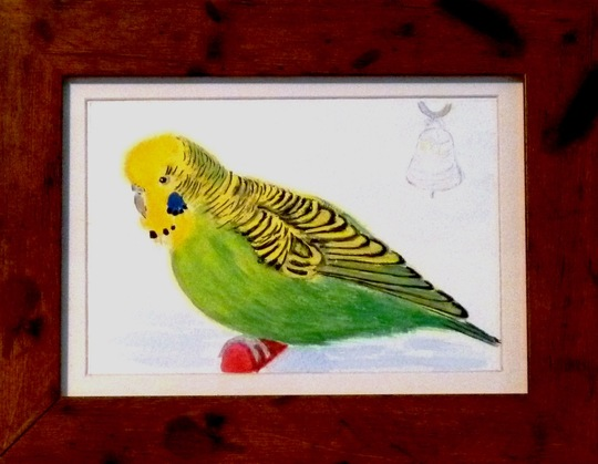 CROCUS BUDGIE painting by Pamg