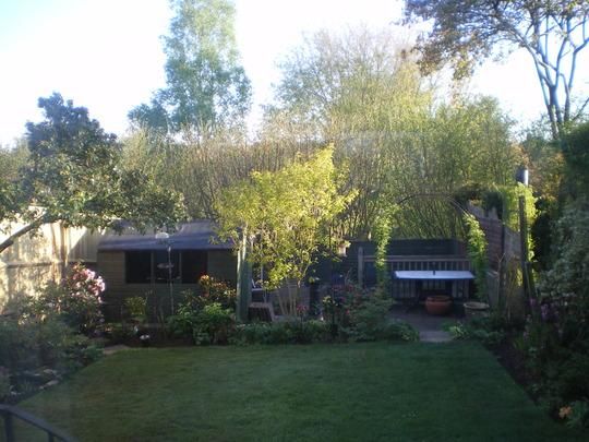 Back garden overview.