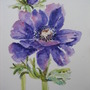 Anemone watercolour