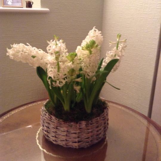 A basket of white hyacinths.