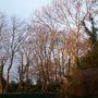 winter sun 1