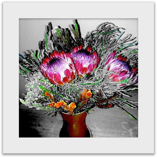 Protea flowers from daughter.....